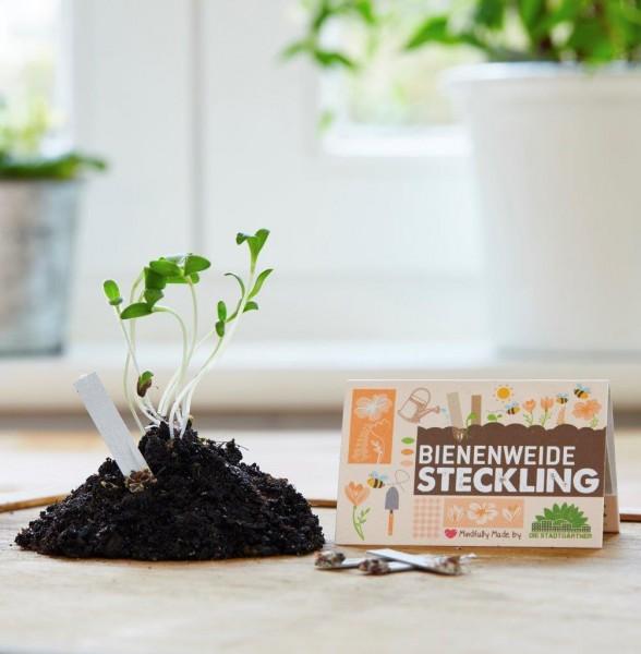 """Steckling """"Bienenweide"""""""