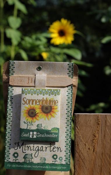 """Mini-Garten """"Sonnenblume"""", Helianthus annuus"""