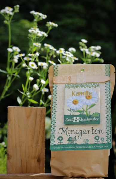 "Mini-Garten ""Kamille"", Matricaria chamomilla"